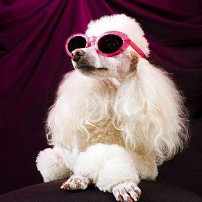 6. Les chiens sur grand écran