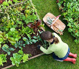 Cultiver ses propres légumes