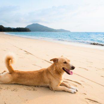Voyage: 9 hôtels de rêve pour les chiens