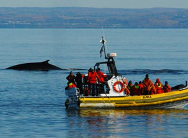 10. Observez les baleines à Baie-Sainte-Catherine