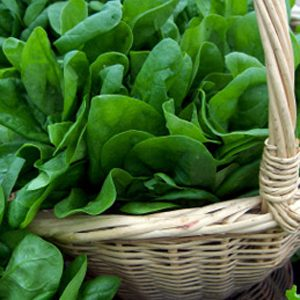 Épinards et verdure