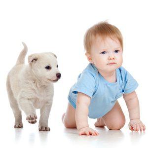 Comment présenter votre animal de compagnie à votre bébé