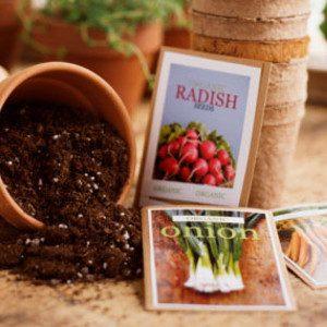 Les semences biologiques sont en danger