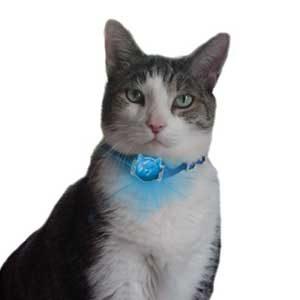 1. Le téléavertisseur pour chat