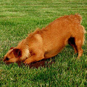 5. Réparez les dommages causés par votre chien