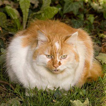 Comment savoir si mon animal de compagnie a un problème de poids?