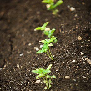 Protéger de jeunes plants