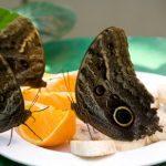 7 moyens de manger dehors sans « parasites » ailés