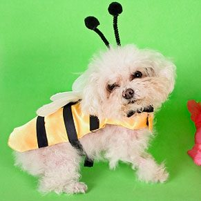Chien déguisé en abeille