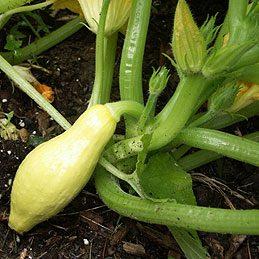 Débarrasser le jardin des vers parasites