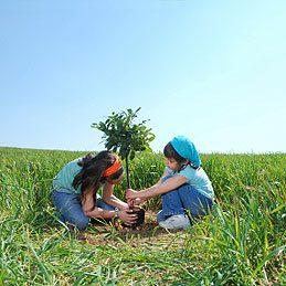 Tuteurer un arbre