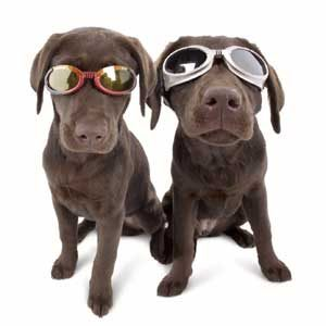 2. Les lunettes pour chien