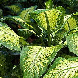 Humidifier les plantes