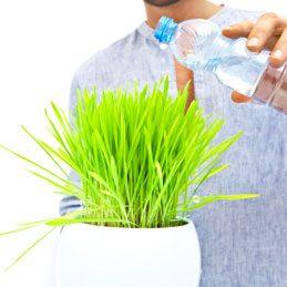 Reminéraliser les plantes