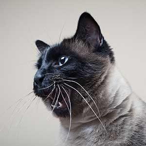 4. Les effets de l'herbe aux chats