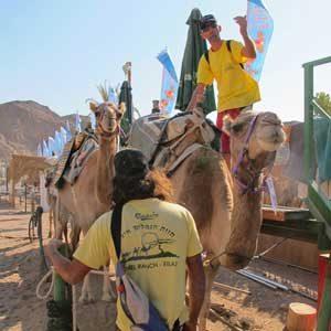 2. Épargnez un cheval, montez un chameau