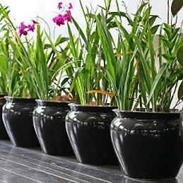 Nourrir les plantes