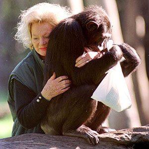 2. Kalu (chimpanzé) : 80 millions