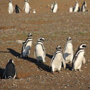 3. Visitez la colonie de pingouins
