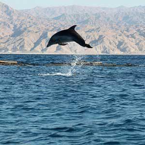 3. Nagez avec les dauphins dans la mer Rouge