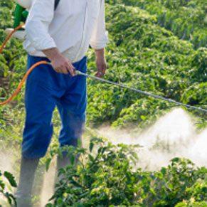5. Les fruits et légumes chargés de résidus de pesticides peuvent tuer