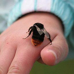 4. Soulager une piqûre d'abeille