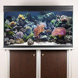Nettoyer un aquarium