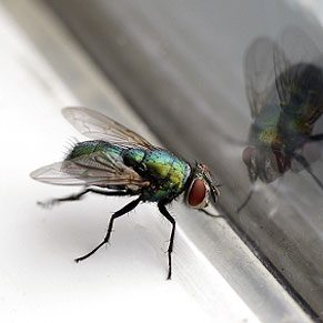 4. Se débarrasser des coquerelles et des insectes