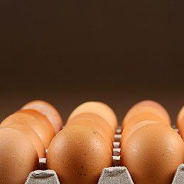3. Récipient pour congeler des œufs