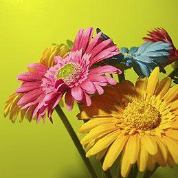 3. Transporter des fleurs coupées