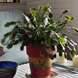 3. Engraisser des plantes