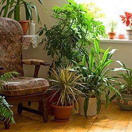 Sous les pots des plantes d'intérieur