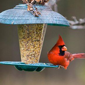 4. Mangeoire d'oiseaux
