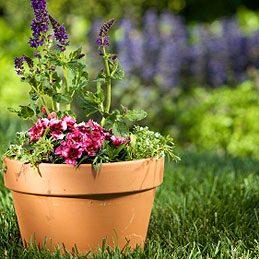 4. Suspendre une plante en pot
