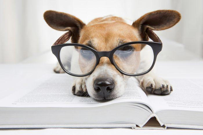 4. Ils peuvent inciter les jeunes à lire