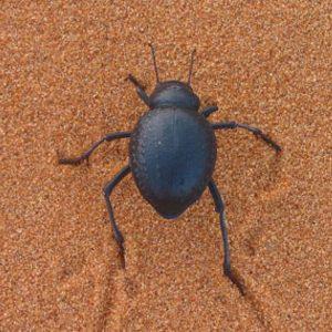 5. Parties d'insectes