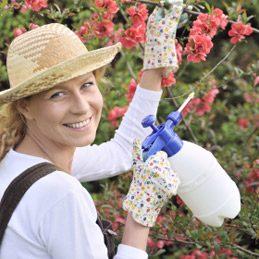 5. Préparer un pesticide naturel