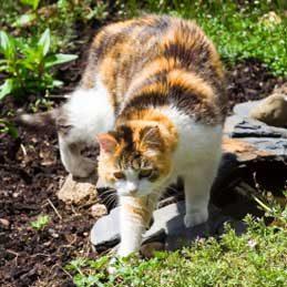 4. Éloigner les chats du jardin
