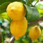 5 autres trucs à faire avec le citron