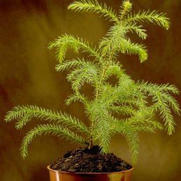 Tuteurer une petite plante fragile