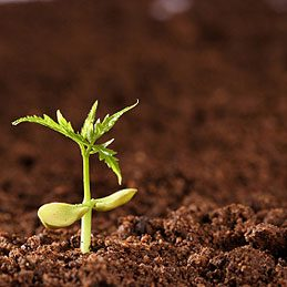 5. Tester de vieilles graines