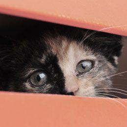 Faites-en un nid temporaire pour petits animaux