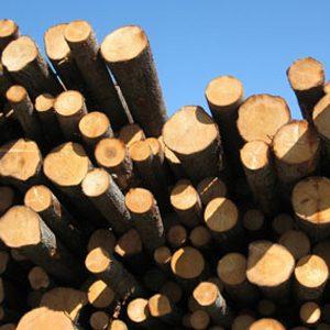 6. Pâte de bois