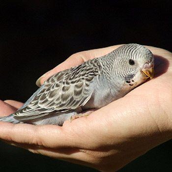 Pouvez-vous assurer à votre oiseau une vie saine et sûre ?