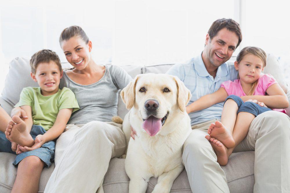 6. Ils alimentent les conversations familiales
