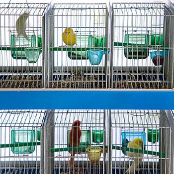 Où achèterez-vous votre oiseau ?