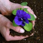 Outils de jardinage essentiels