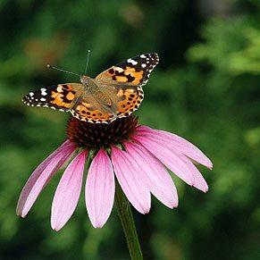 Inviter oiseaux et papillons dans votre jardin - Comment attirer les oiseaux dans son jardin ...