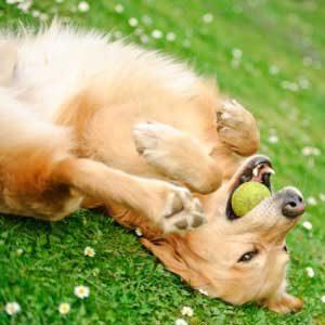 2. Le chien vous distrait gratuitement