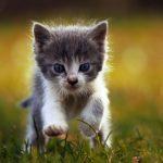 10 choses à savoir avant d'acheter un chat